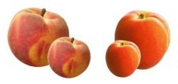 Confiture peche-abricot